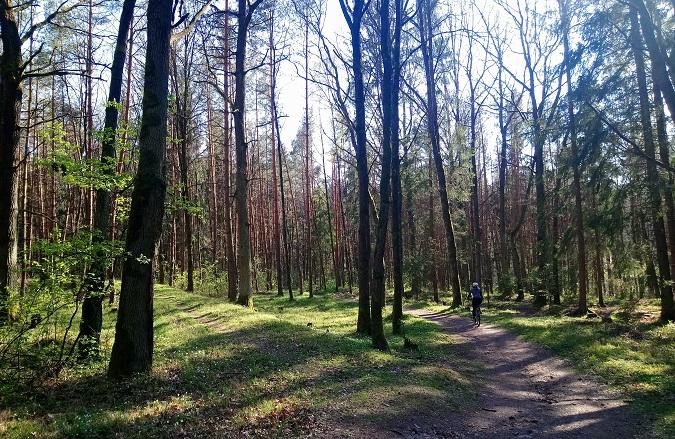 Bike path in a forest around Pilsen